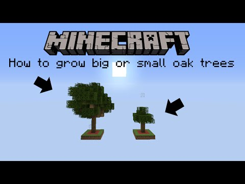 How to grow always big or small oak trees.