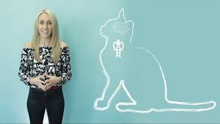 How do cats purr? Vet explains!