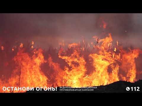 Причина 90% лесных пожаров – человек