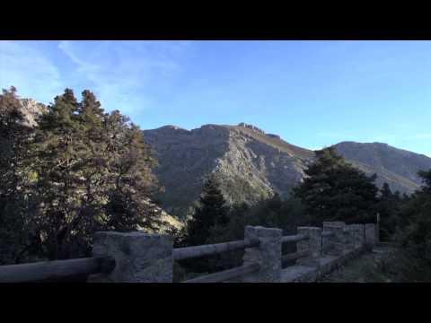 Pinsapo de las Escaleretas, Parauta (Rincón Singular)