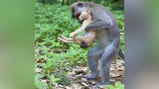 ANIMALS SAVING EACH OTHER