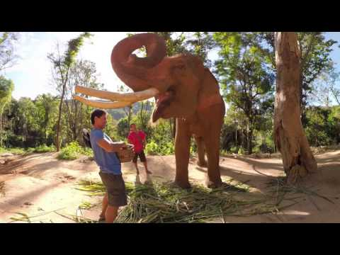 #FindYourJourney: Thailand Elephant Experience in 360 Virtual Reality