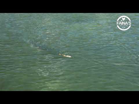 I cercatori di profondità sonici per pescare senza fili