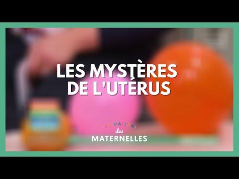Les mystères de l'utérus - La Maison des maternelles #LMDM