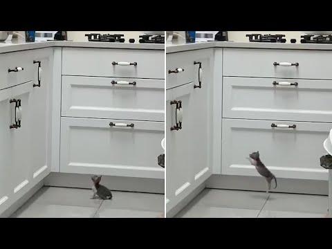 חתלתול קטן מנסה לבצע קפיצה ענקית