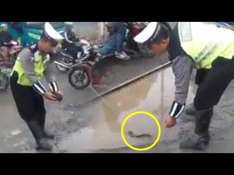 Polisi Minta Maaf setelah Masukkan Lele ke Genangan Air di Tengah Jalan, Begini Penjelasannya