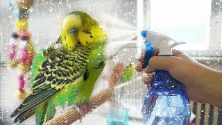 How to Give Your Budgie a Bath | Learn All About