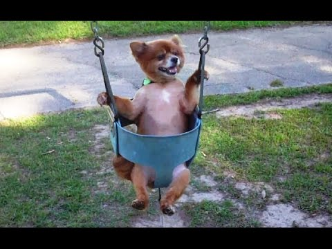 Got the Blues? Watch These Dogs on Swings!
