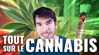 Tout sur le cannabis