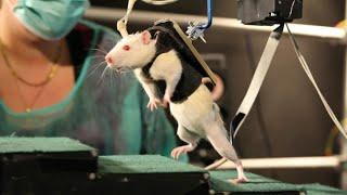 इन जानवरो के दिमाग के आगे इंसान ने भी हाथ खड़े कर दिये। Top 5 Most Intelligent Animals in the World.