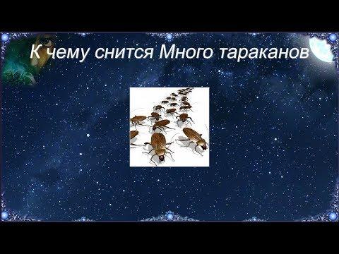 К чему снится Много тараканов (Сонник)