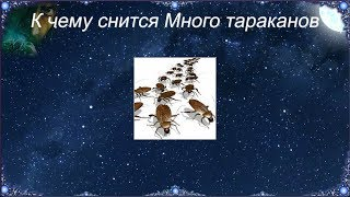 К чему снятся Тараканы видео -К чему снится Много тараканов
