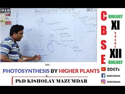 PHOTOSYNTHESIS IN HIGHER PLANTS  By  PhD KISHOLAY MAZUMDAR