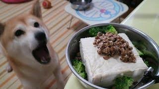 柴犬小春 【ASMR】朝から大騒動! 豆腐一丁&納豆をガッツリ頂く