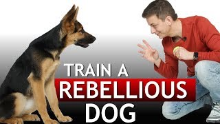 "How to Train a Dog During the ""Rebellious"" Phase!"