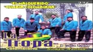 la tropa colombiana el gallito tapado