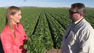 Director discusses food safety practices on the farm with Yuma grower