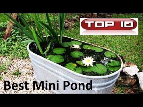 Top 10 acquari  Piccoli stagni in giardino 🐠