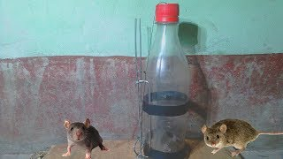how to make a plastic bottle mouse trap free online videos best