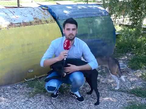 Psi lutalice u Smederevu