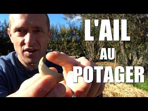 , title : 'L'ail au potager