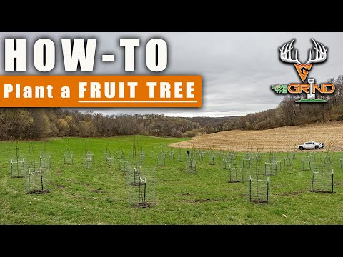 HOW-TO: Plant a FRUIT TREE