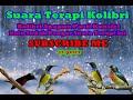 Download Lagu kolibri apapun pasti konslet klo dengar suara terapi ini Mp3 Free