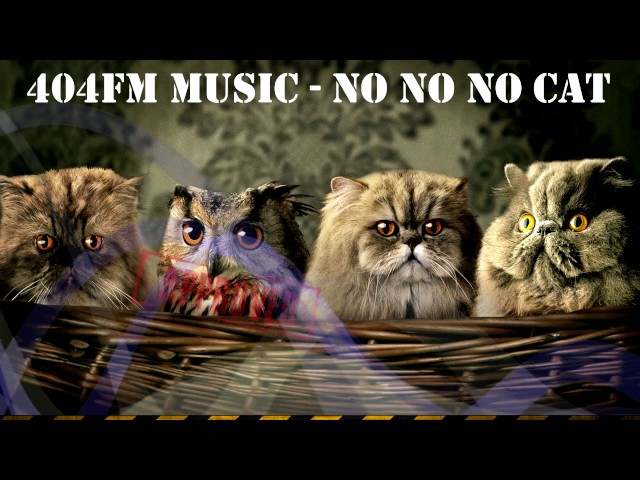 No No No Cat Song