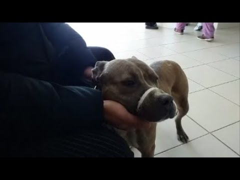 Отвезли с Ахмедом собаку с лишаем на осмотр в Идею  Прогулялись по торговому центру