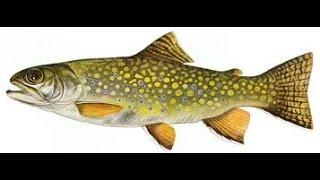 Episode 8 how to use fish as a fertilizer for garden season 2