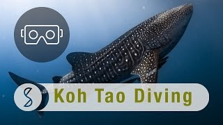 Diving with Whale Sharks and Barracudas in Koh Tao : Spice 360 VR