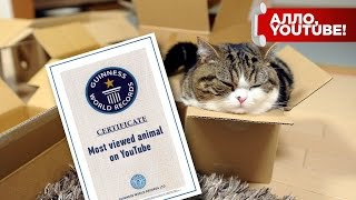 Самый популярный кот на YouTube попал в Книгу рекордов Гиннесса - Алло, YouTube! #89