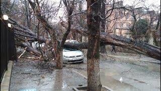 ДТП в Симферополе: на улице генерала Попова на автомобиль упало дерево (видео)