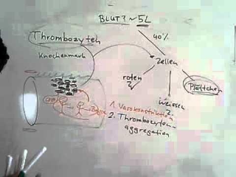 Hypertonie Arzneimittelkombination