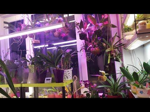 Небольшой обзор висячих орхидей )