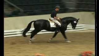 Redwine black Hanoverian stallion