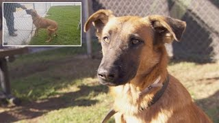 Dog Thrilled To See Owners At Shelter But Theyre There To Adopt Different Dog