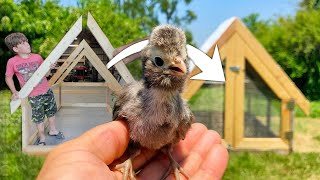 The MINI CHICKEN COOP You Can Build In A Day - HOW TO BUILD