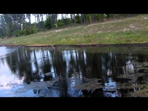 Bass Fishing In A Local Pond Part One