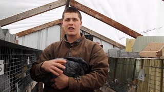 The Basics of Raising Meat Rabbits (Complete Overview)
