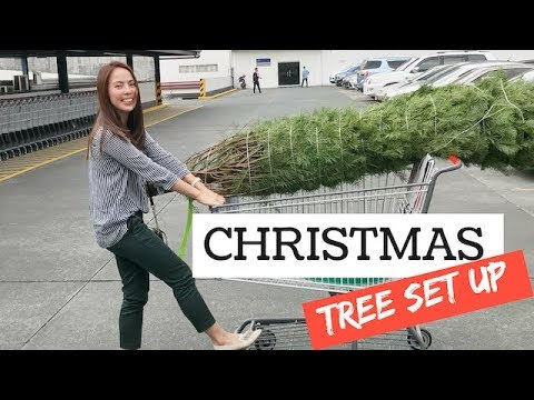PUTTING UP OUR CHRISTMAS TREE! 🎄