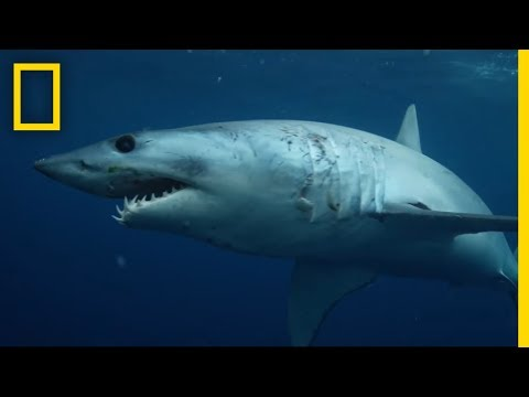 The Fearsome Might of Sharks in All Its Variety