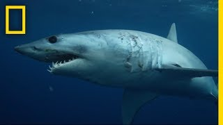 Sharks 101 | National Geographic