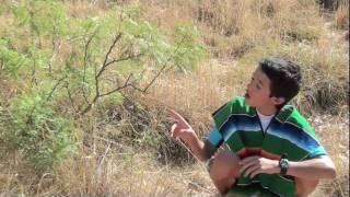 Fistful of saltcedar (Battles against Invasive Species)