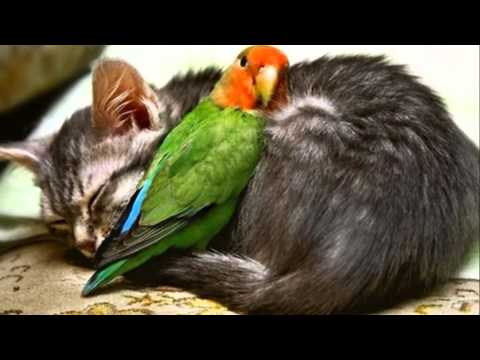 L'amicizia nel libro del Siracide.wmv