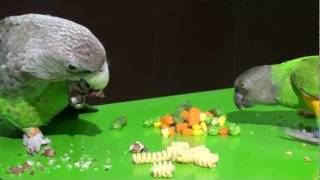 Parrot Thanksgiving Day Feast