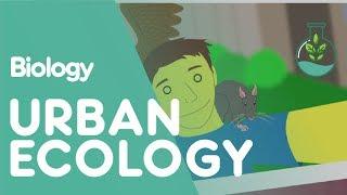 Ecosystem - Urban Ecology