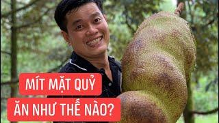 Lạc vô rừng mít, Khương Dừa muốn xỉu khi thấy trái mít mặt quỷ xấu xí nhất thế giới