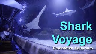 2017 Houston Downtown Aquarium Shark Voyage Train Ride On Ride Low Light HD POV