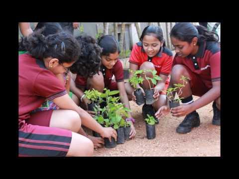 PLANTING A MEDICINAL PLANT
